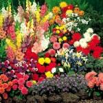 One Kings Lane Gardening Tips