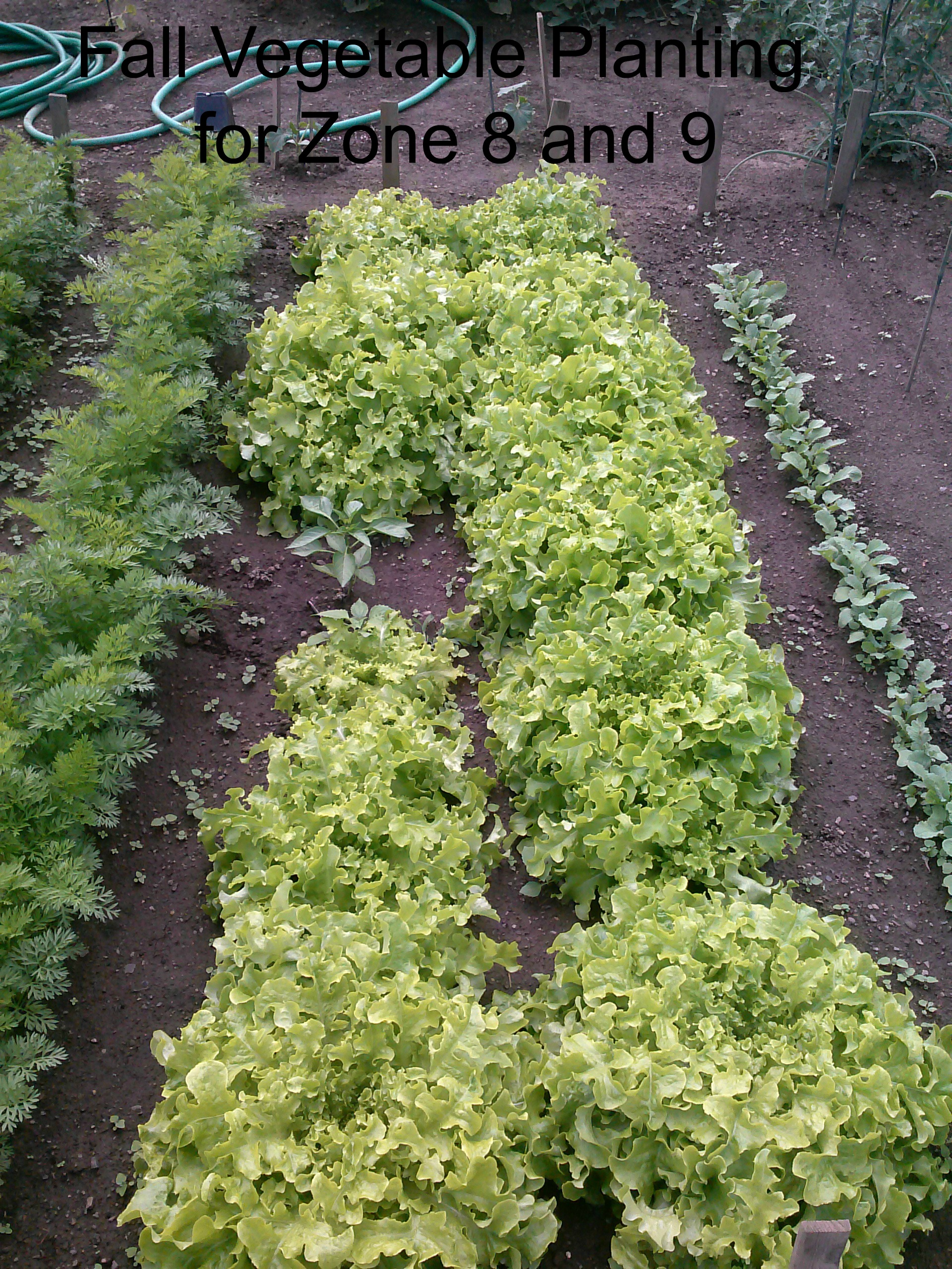 Fall Vegetable Planting for Zone 8 and 9