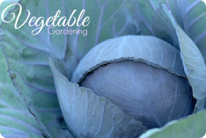 Vegetable Gardening Must Haves For Budget Friendly Gardeners