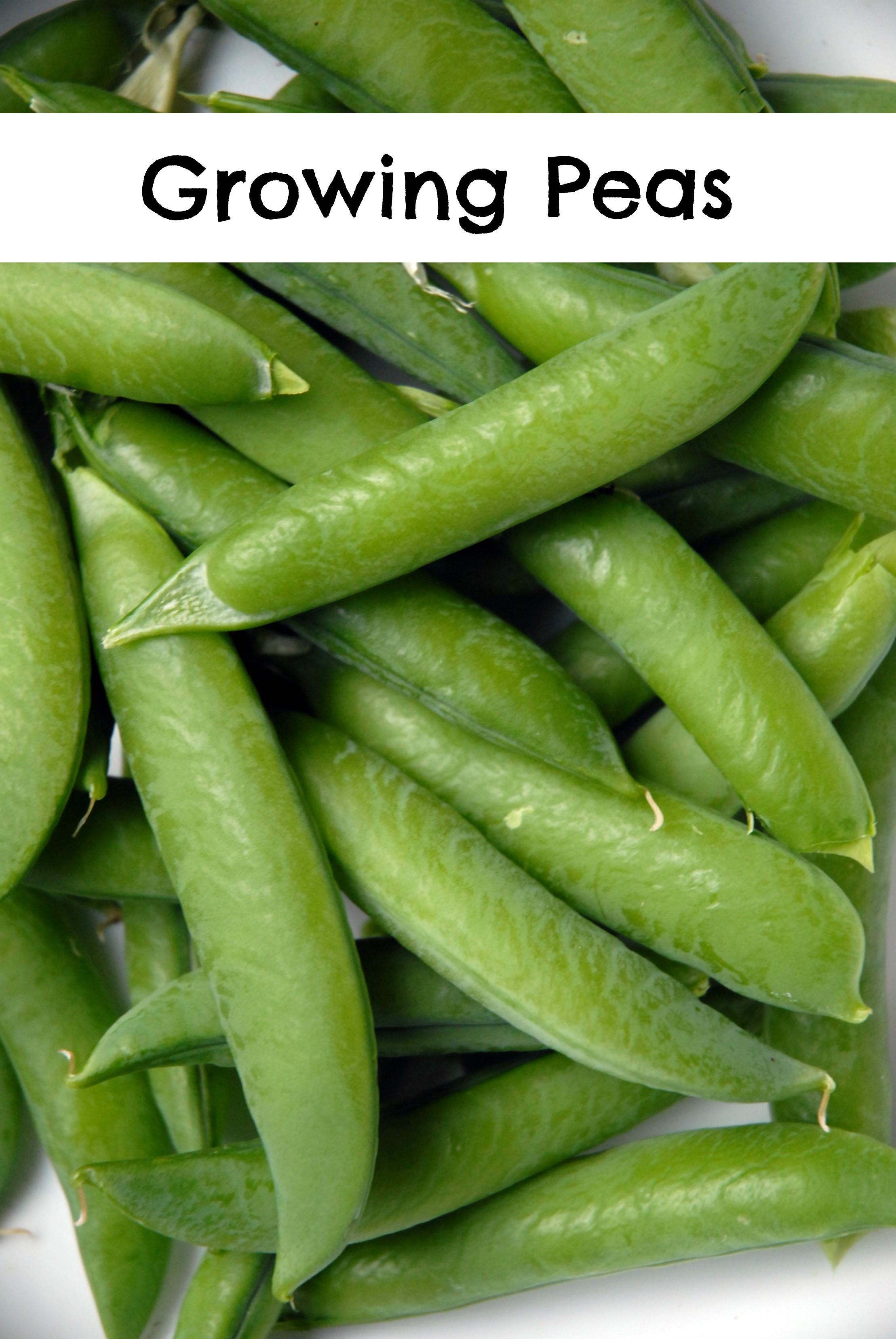 Growing Different Types Of Peas In Your Garden