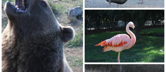 Get Wild With The Wildlife Safari in Winston Oregon #travel #pnw #zoo