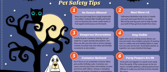 Top 6 Halloween Pet Safety Tips