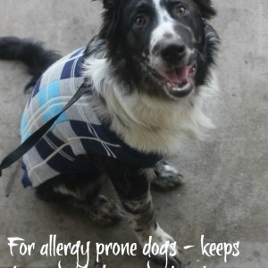 Brothers Complete – Allergy Free Dog Food Review