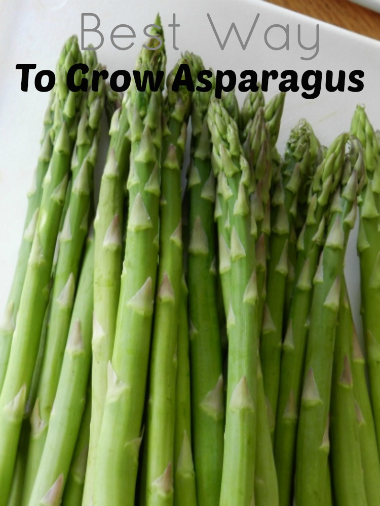 best way to grow asparagus