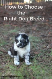 How to Choose the Right Dog Breed