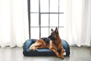 Looking for Pet Beds For Large Dogs? Win One!